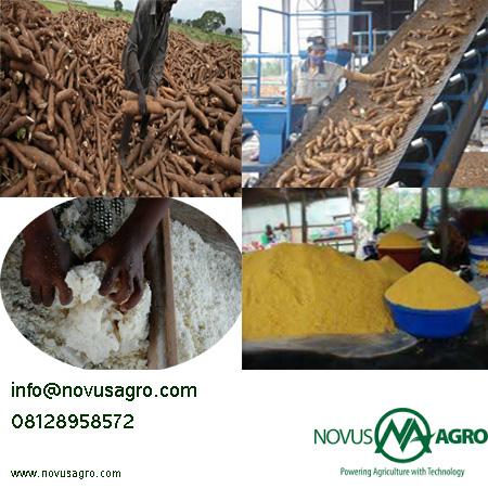 cassava photoshop